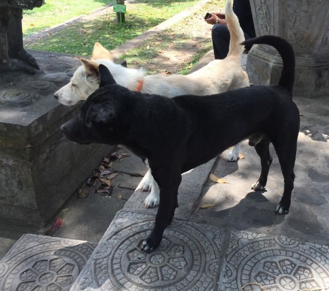 Bali dogs at the Tirta Gangga Water temple - Bali Indonesia