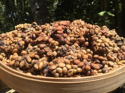 Luwak pooh (luwak coffee)