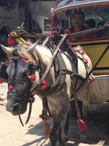Horse/pony cart a.k.a Cidomo