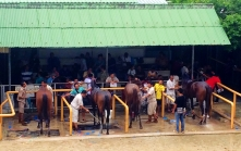 Horse Paddock at the track