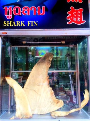 Shark fin - Chinatown Bangkok