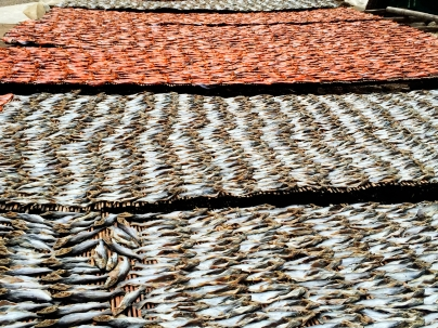 Fish drying in the sun