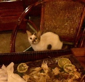 Cat seeking out a fish dinner