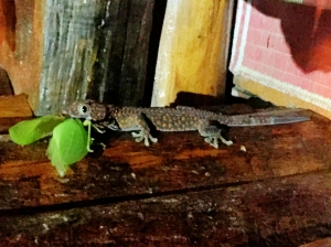Gecko dining in the restaurant with us.