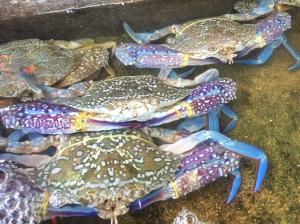 Kampot crabs