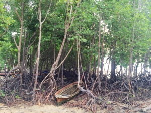 Mangrove trees on the east side at low tide