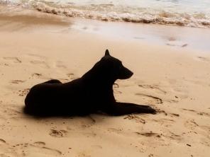 My new friend on Railay Beach Thailand