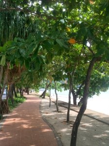 Tree lined beach sidewalk