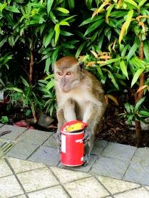 Monkey & pringles - Kuala Lumpur