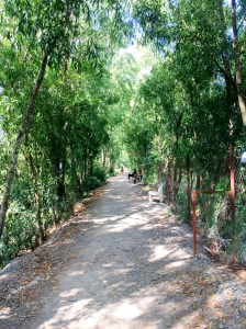 Quiet pathway at Killing Fields