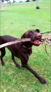 Playing with a palm stick