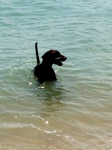 Hector in the sea
