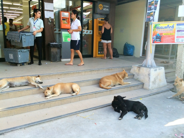 Dogs at 7/11