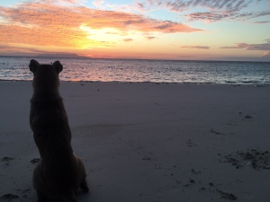 Ruffie at sunrise