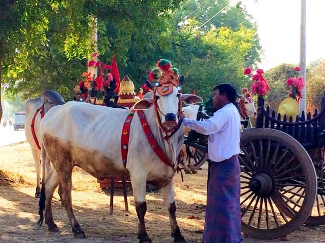 IMG_3622_Bagan