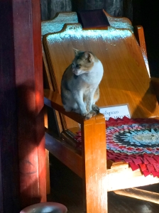 Cat on a throne - Jumping Cat Monastery