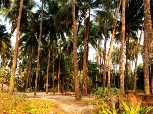 Empty beachfront land