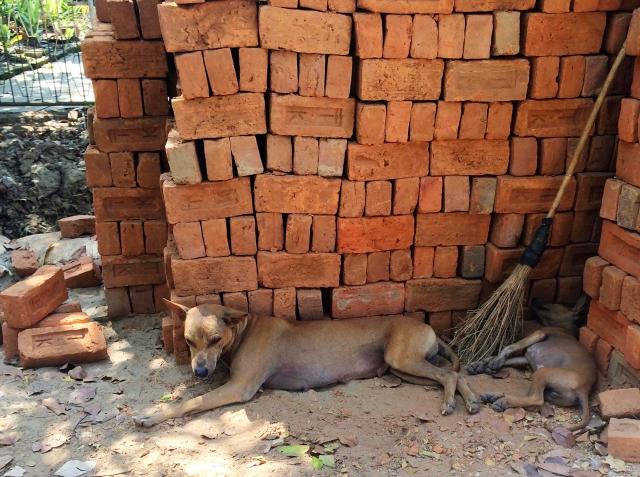 Dogs - Dala, Burma