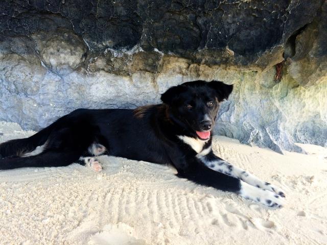 Papaya Beach:Palawan