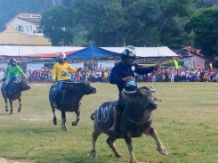 El Nido - Water buffalo races