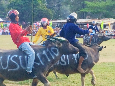El Nido Buffalo races