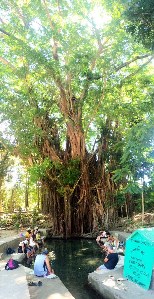 The Balete tree & fish pond