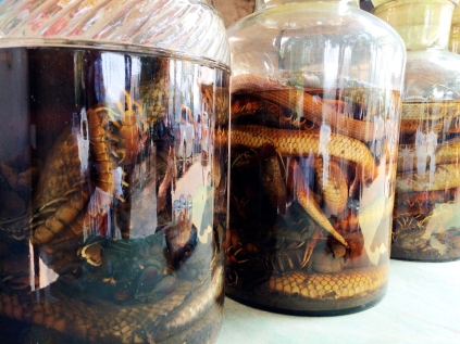 Liquor made from snakes, lizards, turtles, centipedes and alcohol.