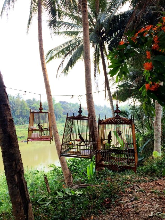 Birds in Luang Prabang