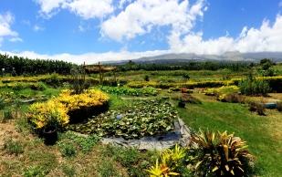 Nui's Garden in Kula, Maui