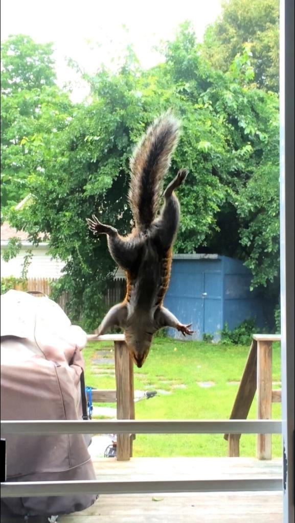 squirrel-saratoga