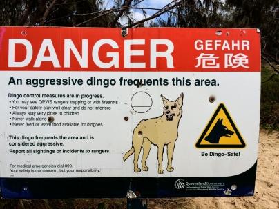 Dingo warning sign