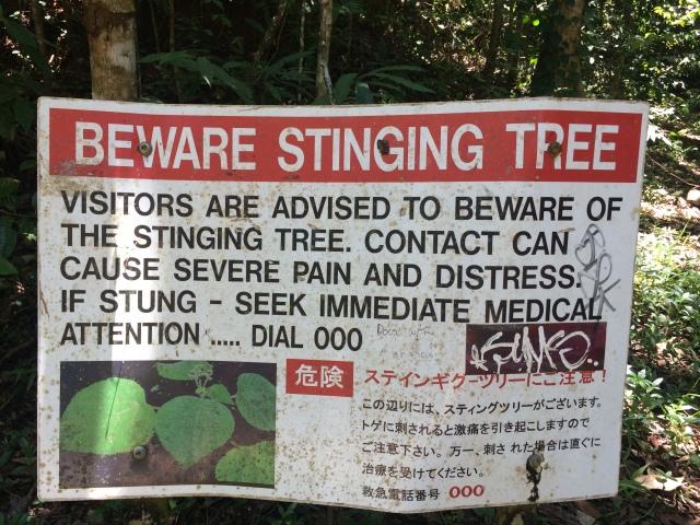 Stinging tree warning