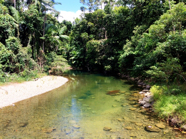 Creek in Daintree