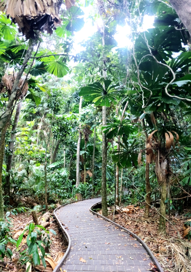 Paved trail at Daintree Rainforest