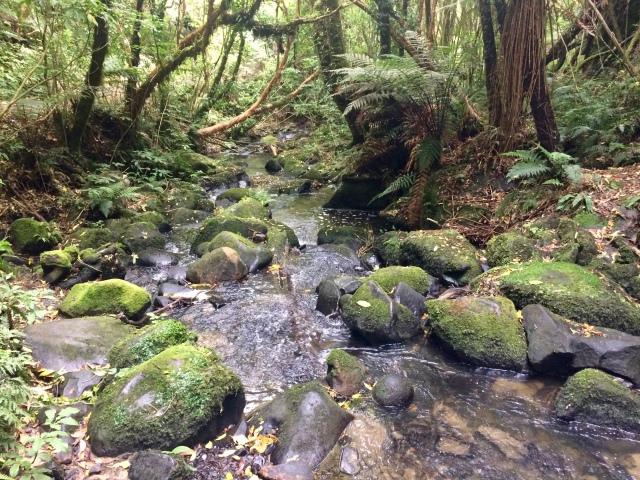 Trail to Maitai Falls