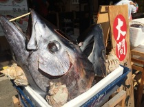 Fish head on display at Tsukiji fish market
